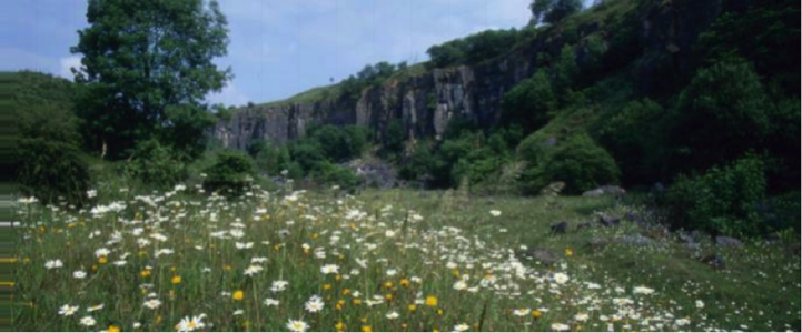 Wild flowers in calcareous grassland - Miller's Dale Quarry, Derbyshire